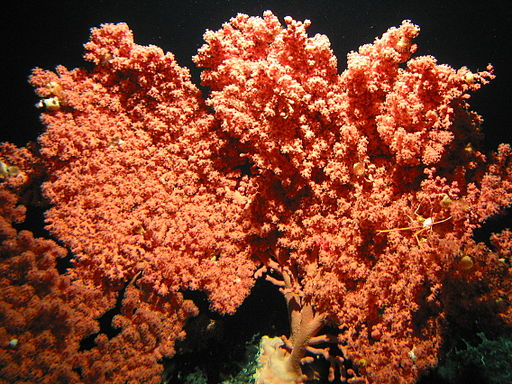 Fish in cold-water coral habitats