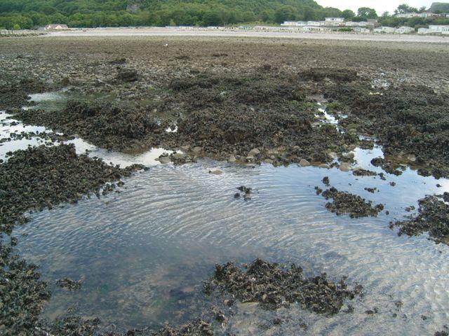 Identifying knowledge gaps hampering application of intertidal habitats in coastal protection