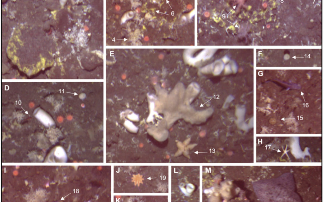 Spatial patterns of arctic sponge ground fauna and demersal fish are detectable in autonomous underwater vehicle (AUV) imagery