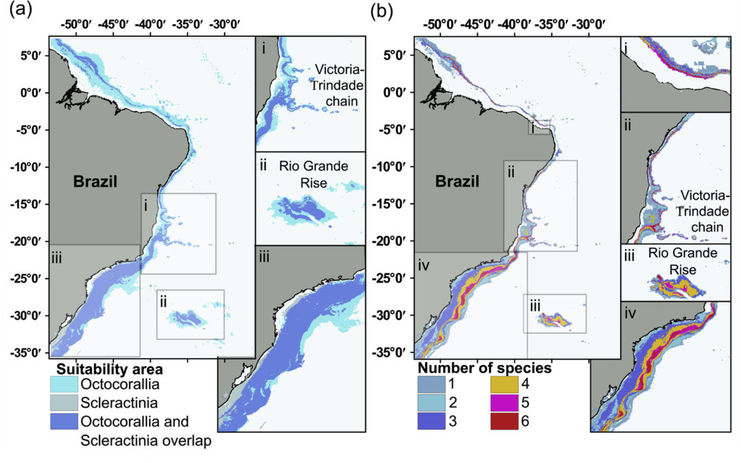 Habitat suitability and environmental niche comparison of cold-water coral species along the Brazilian continental margin