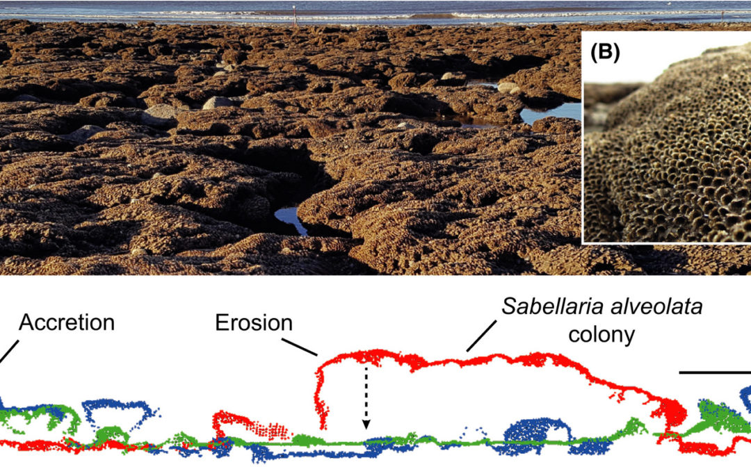 Three‐dimensional mapping reveals scale‐dependent dynamics in biogenic reef habitat structure