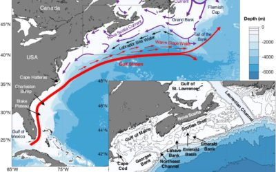 Life in the Fast Lane: Modeling the Fate of Glass Sponge Larvae in the Gulf Stream